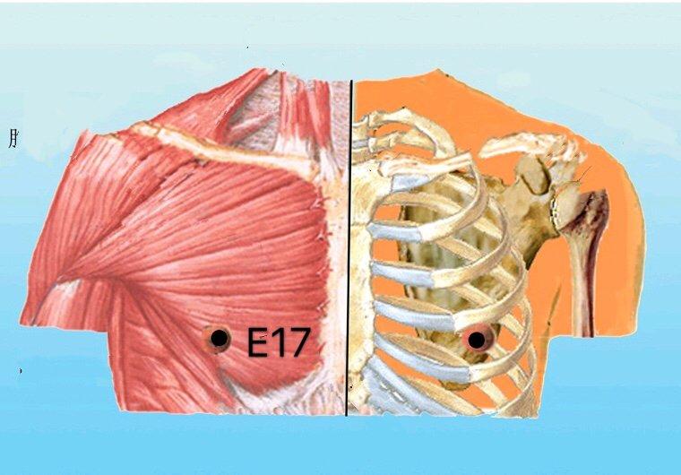 punto e17 ruzhong anatomia