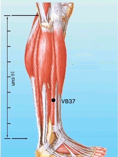 punto vb37 guangming anatomia