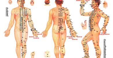 mapa de punto acupuntura