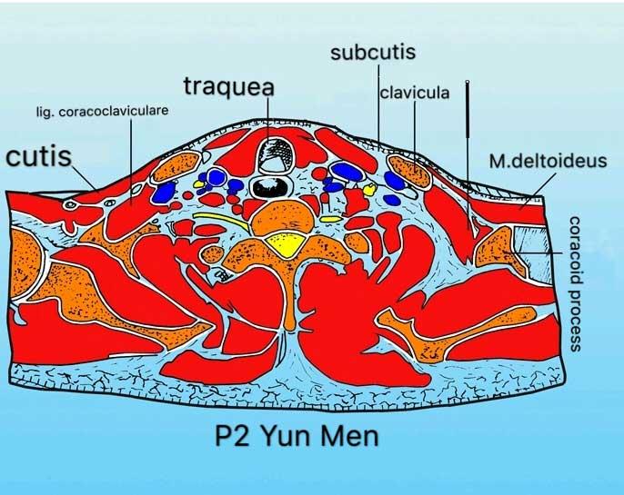 corte transversal punto p2 yun men