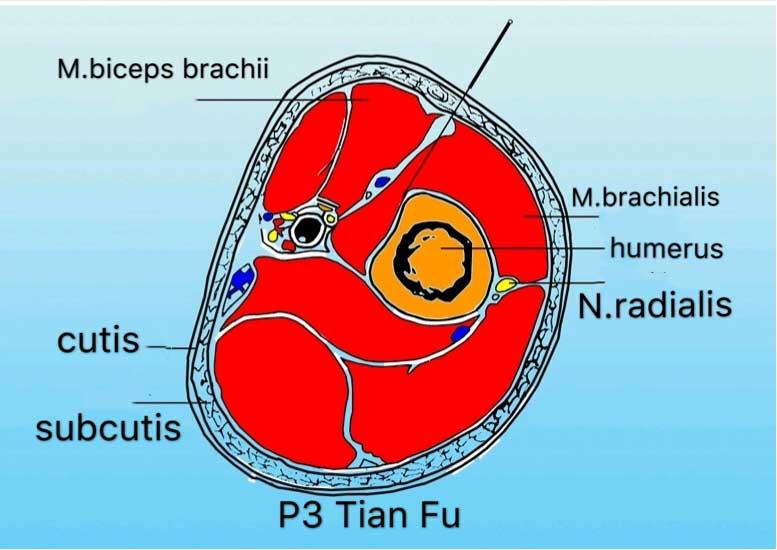 corte transversal punto p3 tianfu