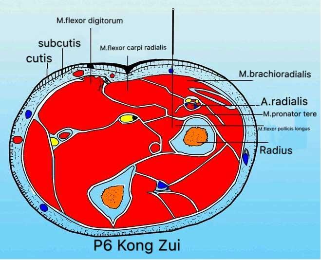 corte transversal punto p6 kongzui