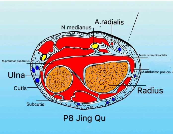 corte tranversal punto p8 jing qu