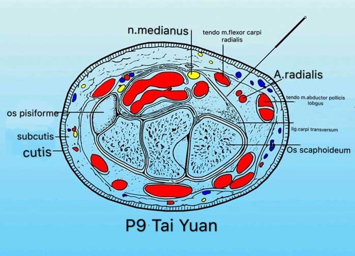 corte tranversal punto p9 tai yuan