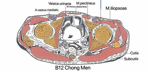 punto b12