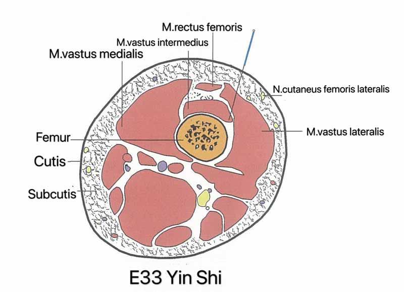 estomago 33 yin shi