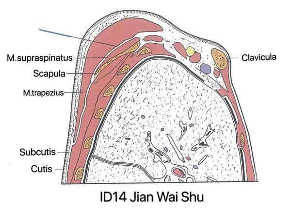 punto intestino delgado 14