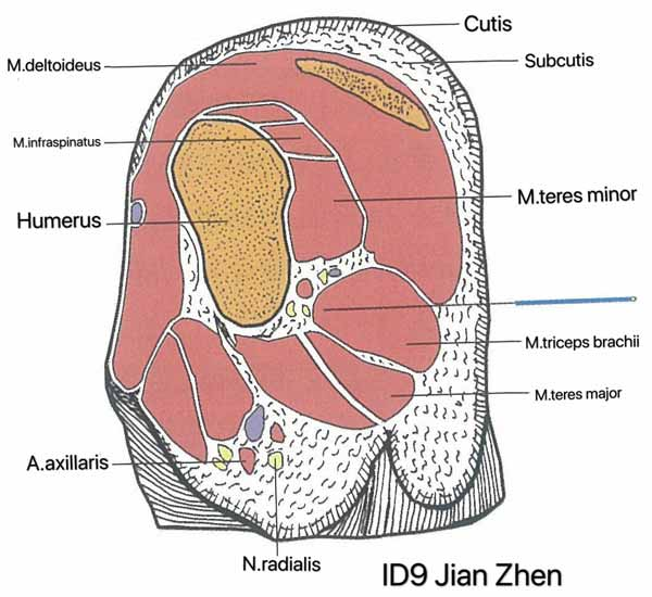 punto intestino delgado 9