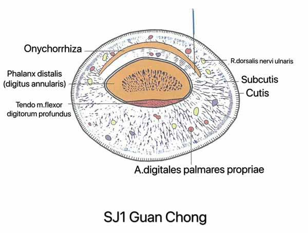punto san jiao 1
