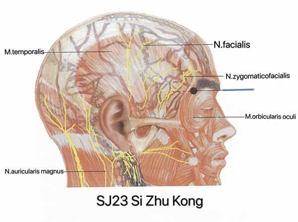 punto san jiao 23
