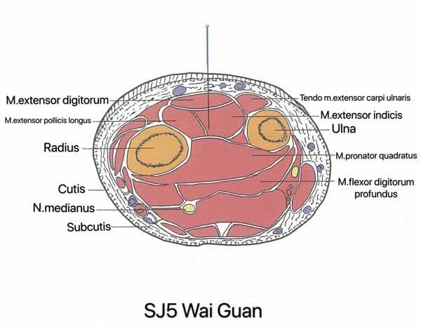 punto san jiao 5