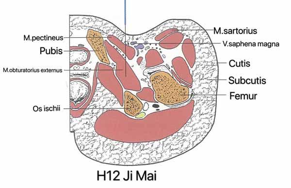 punto hígado 12