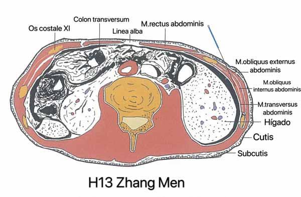 punto hígado 13