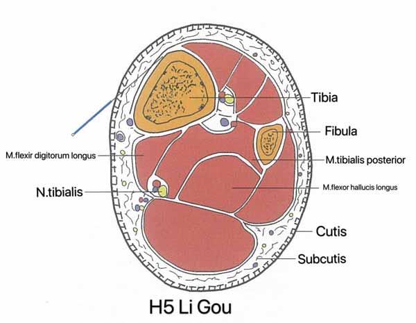 punto hígado 5