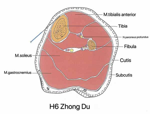punto hígado 6