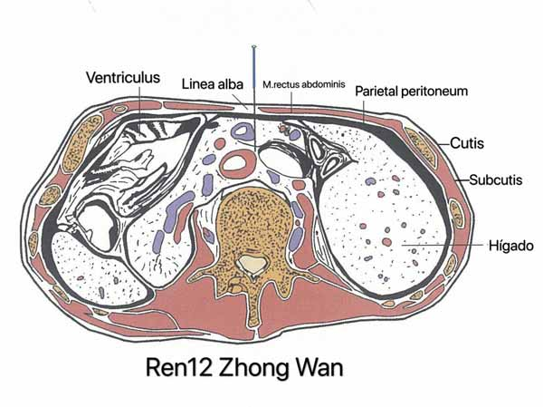 punto ren12