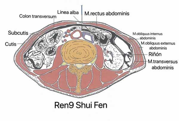 punto ren9