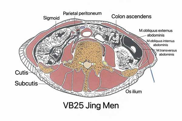 punto vesiculo biliar 25