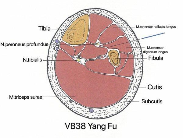 punto vesiculo biliar 38