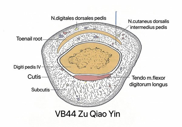 punto vesiculo biliar 44